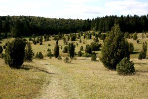 Hayingen_Naturschutzgebiet_Digelfeld
